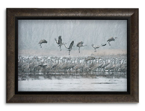 Mangelsen's image titled Ancient Journey - Sandhill Cranes