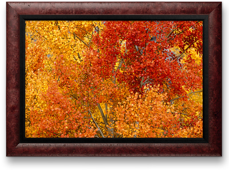 Fill Your Home or Office with Fall Color