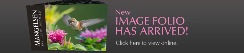 The New Mangelsen Image Folio Has Arrived!