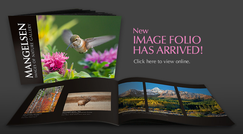 The New Mangelsen Image Folio Coming Soon