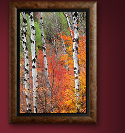 Framed Limited Edition Print titled Fire Among the Aspens