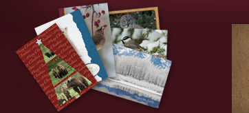 Holiday Art Cards Sets