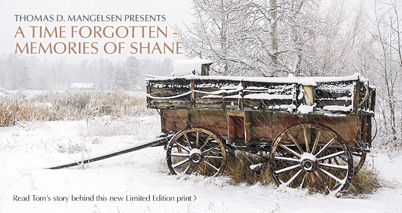 Mangelsen Feature Image titled A Time Forgotten - Memories of Shane