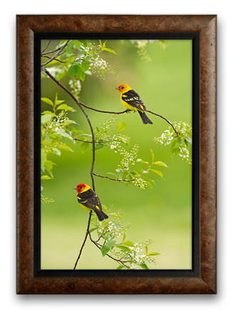 Framed limited Edition print of Spring Blossoms