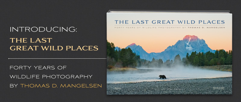 Mangelsen's new book titled The Last Great Wild Places