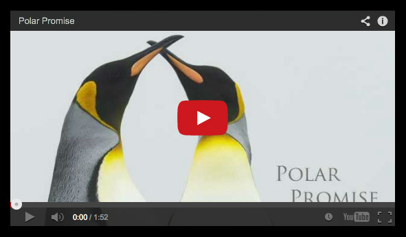 Polar Promise Video