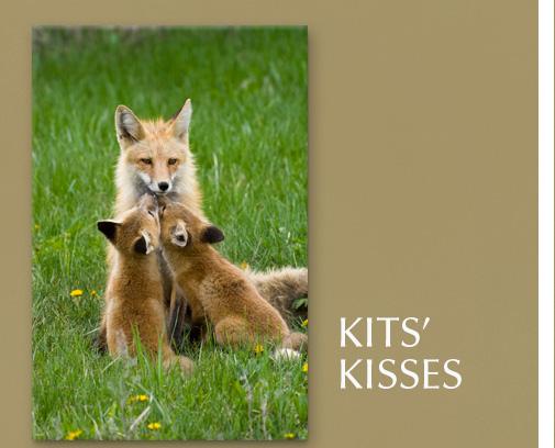 Image titled Kits' Kisses