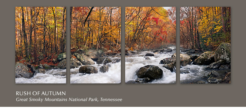 Rush of Autumn tetraptych will add color to your walls all year long