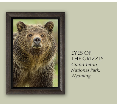 Eyes of the Grizzly is a favorite among collectors