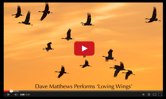 Dave Matthews performs song Loving Wings for Tom and friends.