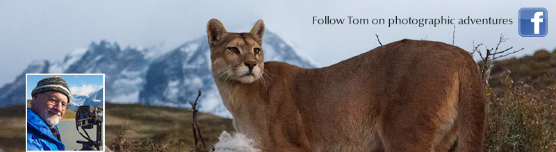 Follow Tom on photographic adventures