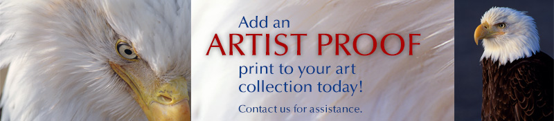 Add a Mangelsen Artist Proof print to your art collection