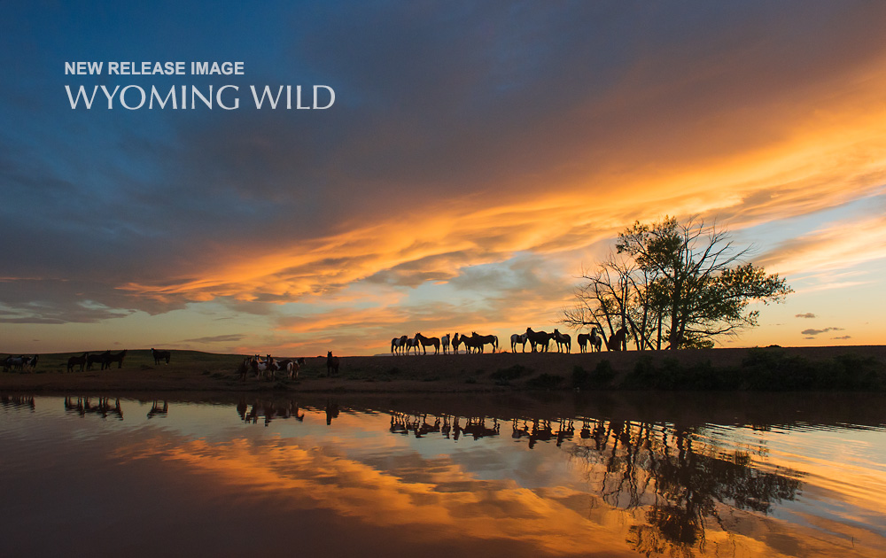 New release image titled Wyoming Wild