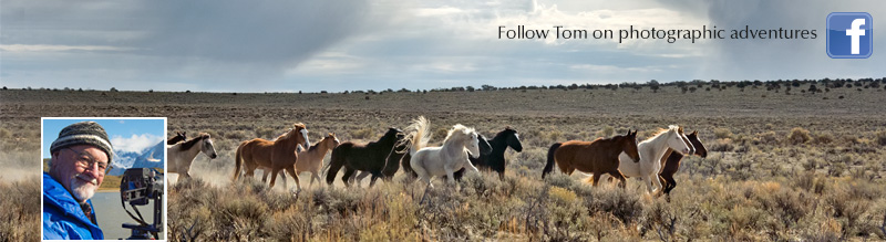 Become a fan and follow Tom's photographic adventures on Facebook