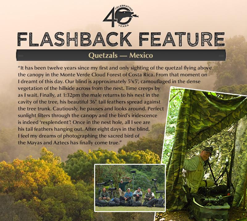 Flashback: Quetzals - Mexico