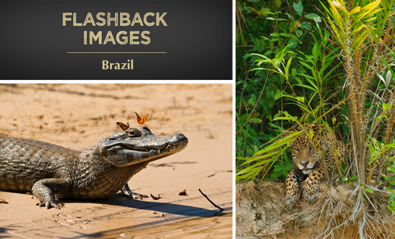 Flashback Images