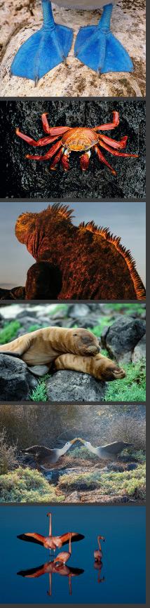 Galapagos Island Expedition