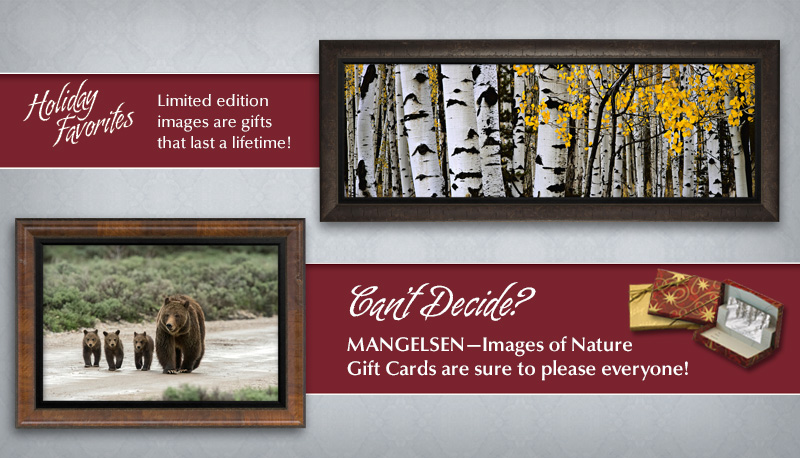 Mangelsen limited edition images are gifts that last a lifetime!