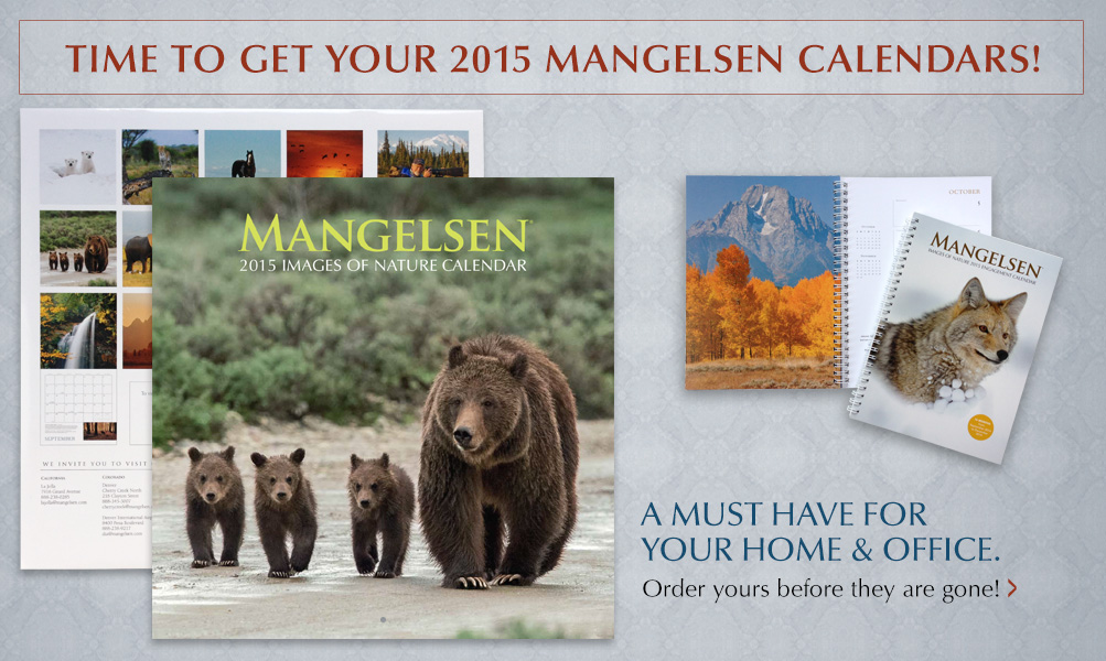 Time to get your 2015 Mangelsen Calendars!