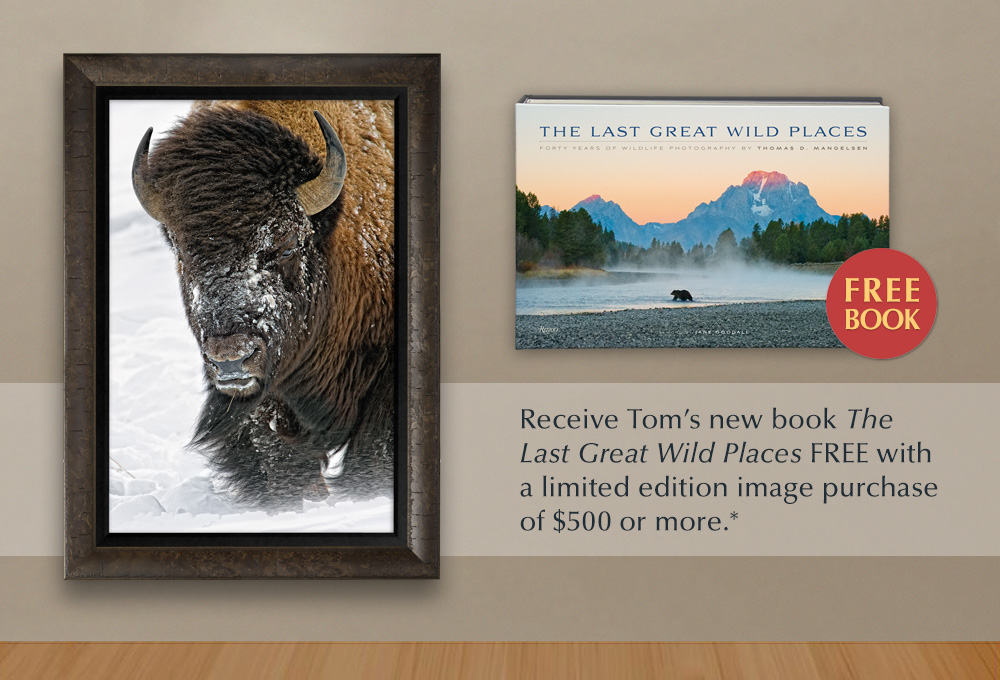 Add a Mangelsen to your collection and receive The Last Great Wild Places book FREE*