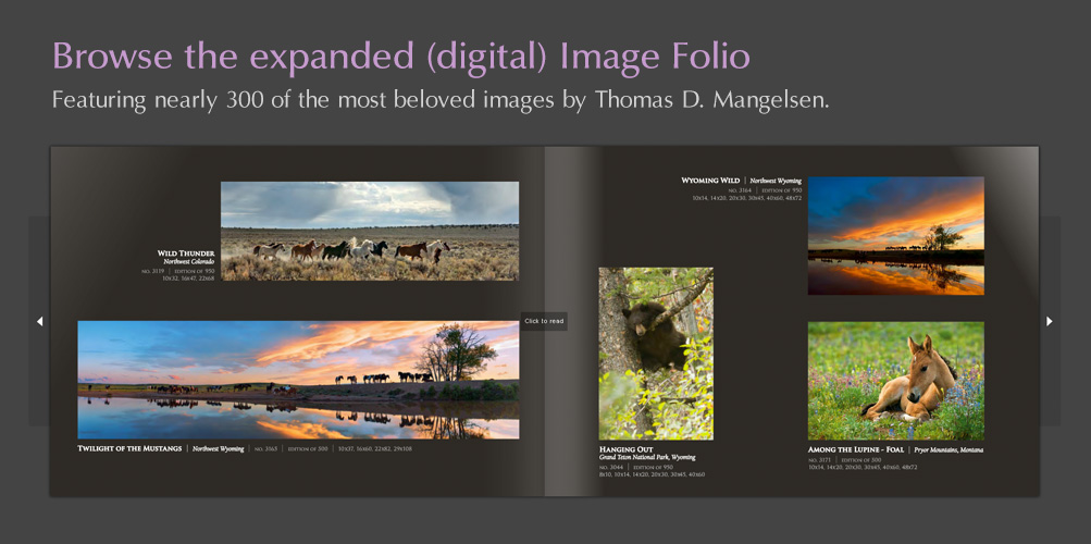 Browse Mangelsen's expanded digital Image Folio!