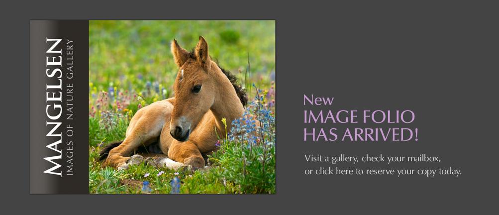 Mangelsen's new Image Folio has arrived!