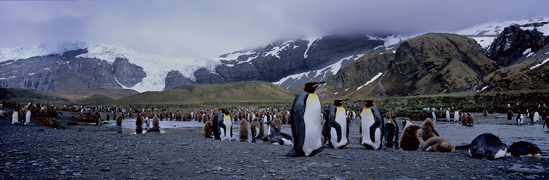 "Mangelsen's ""The Land of Kings""  was photographed on Gold Harbour, South Georgia Island."