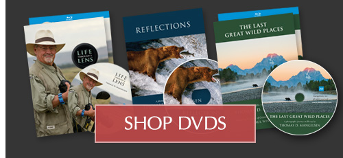 Set a calming tone with a Mangelsen DVD or Blu-ray
