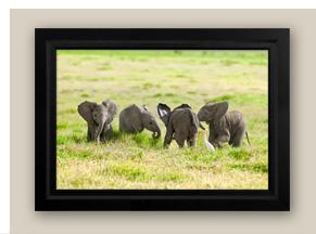 Mangelsen's image titled Amboseli's Hope