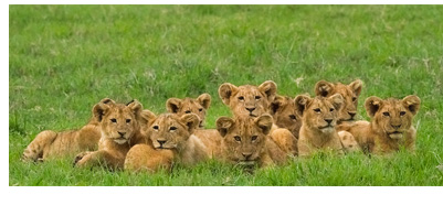 Shop Gifts for Mom - Showing: The Pride of Ngorongoro