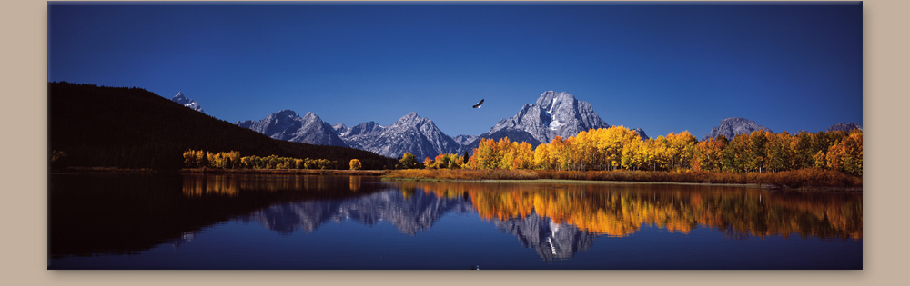 Mangelsen's image titled High Noon on the Oxbow Bend - Bald Eagle and Osprey