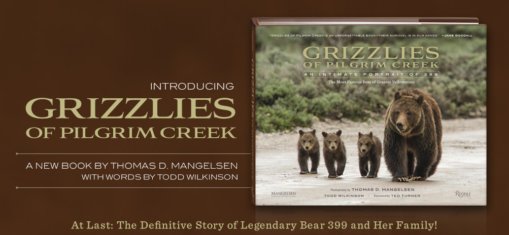 Introducing Mangelsen's new book titled Grizzlies of Pilgrim Creek