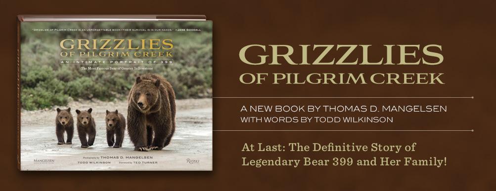 Pre-Order Mangelsen's new book titled Grizzlies of Pilgrim Creek