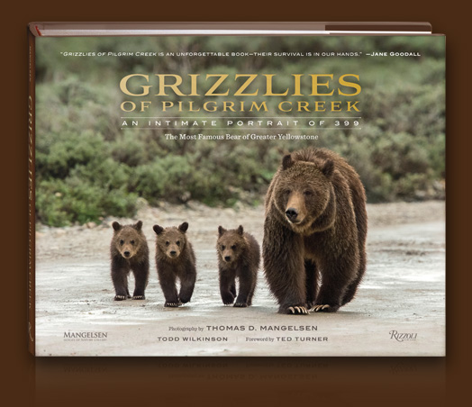 Pre-order Grizzlies of Pilgrim Creek