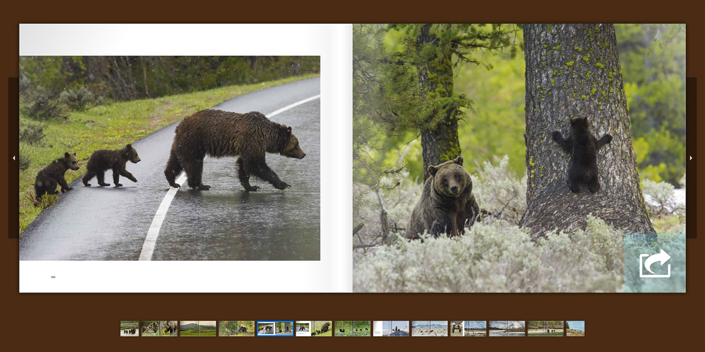 Look inside Tom's new book titled Grizzlies of Pilgrim Creek