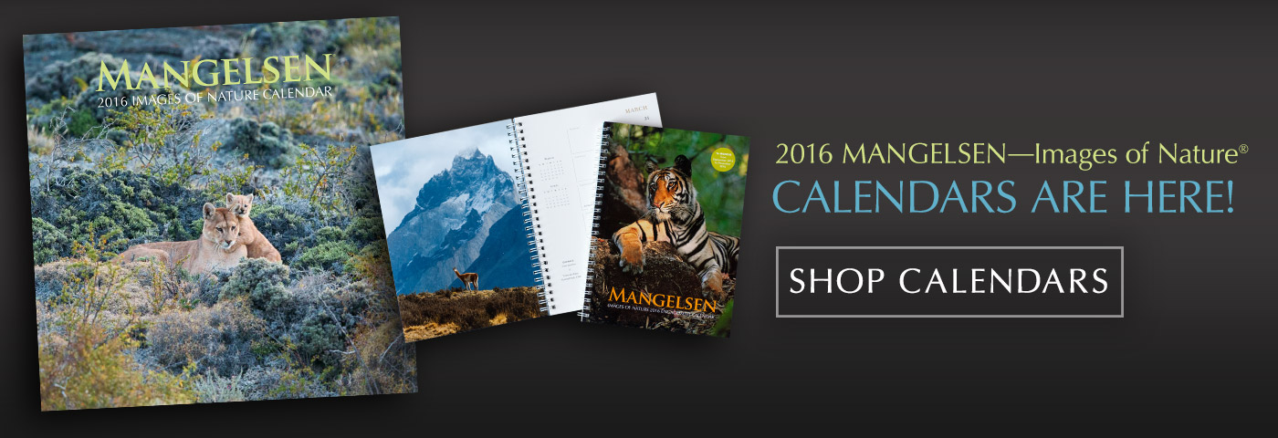 2016 Mangelsen Calendars are Here!