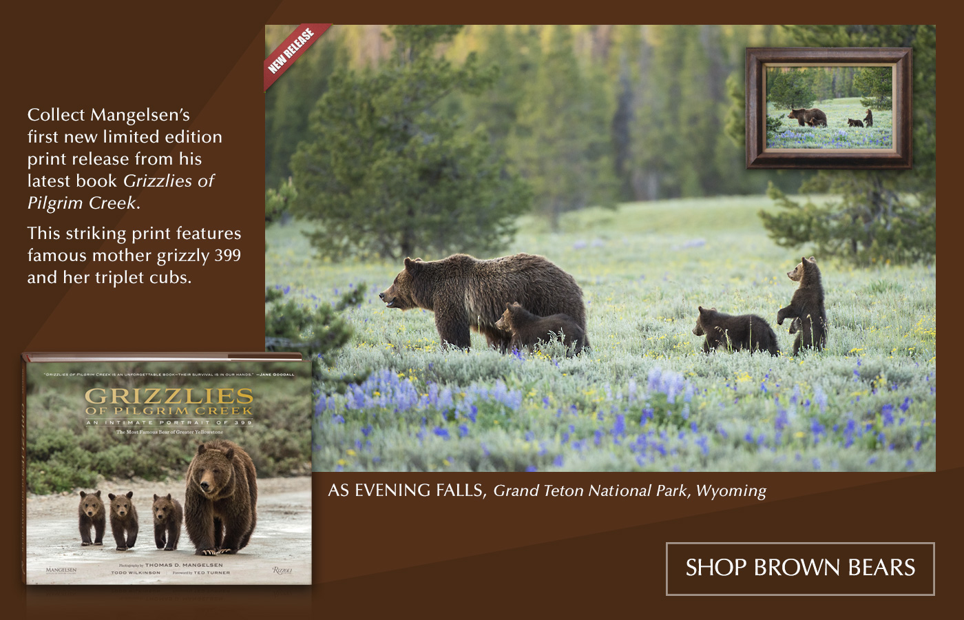 "Mangelsen's new image titled ""As Evening Falls"" is from his upcoming book ""Grizzlies of Pilgrim Creek."""