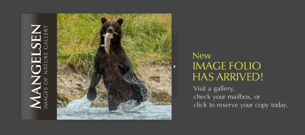 New Mangelsen Image Folio has arrived!