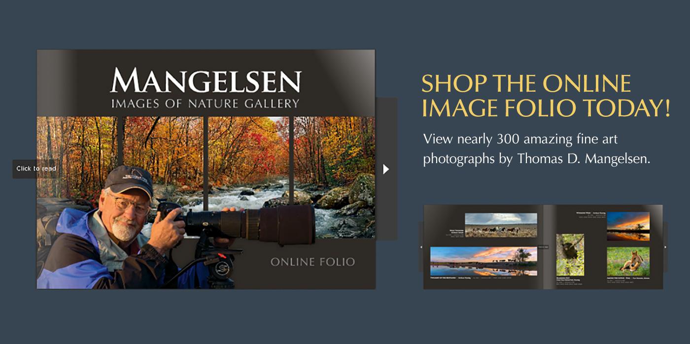 Shop Mangelsen's Online Image Folio!