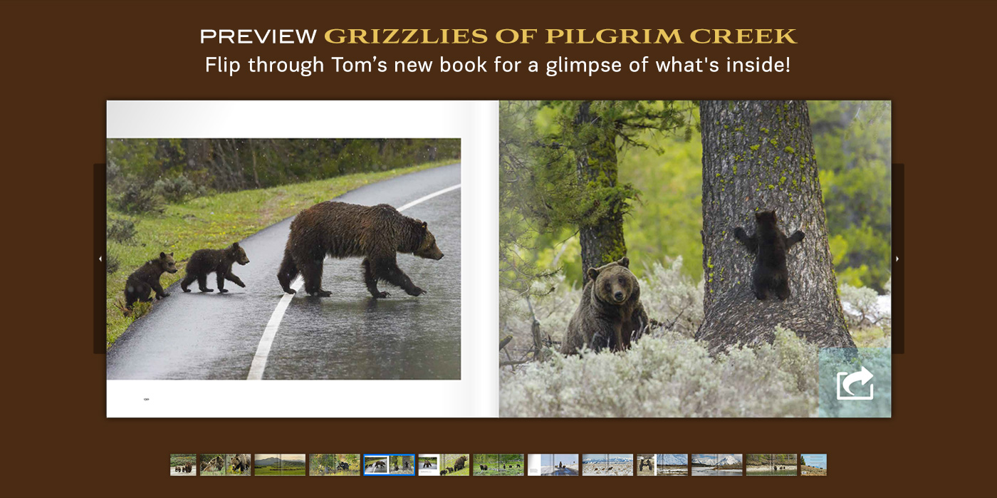 Preview Tom's new book titled Grizzlies of Pilgrim Creek