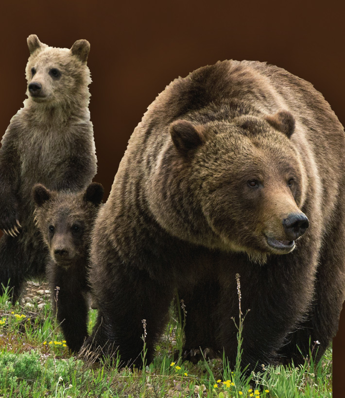 Pre-Order Grizzlies of Pilgrim Creek book scheduled for October delivery*.
