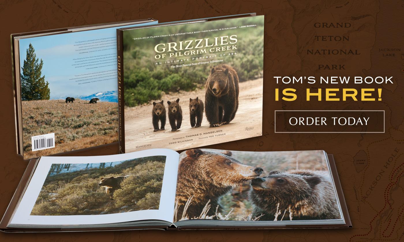 Mangelsen's new book titled Grizzlies of Pilgrim Creek is Here!