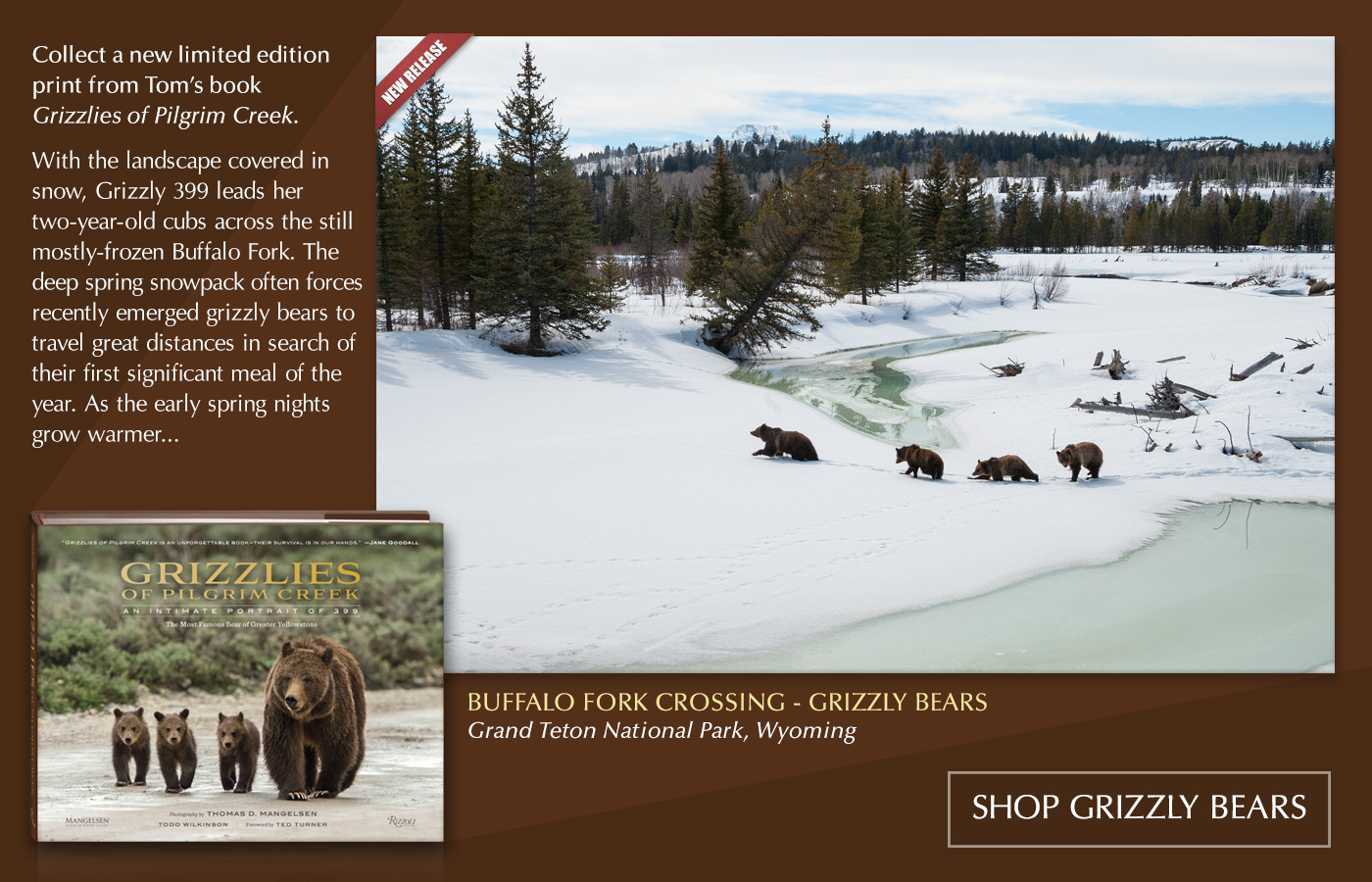 "Mangelsen's new image titled ""Buffalo Fork Crossing - Grizzly Bears"" is from his new book ""Grizzlies of Pilgrim Creek."""