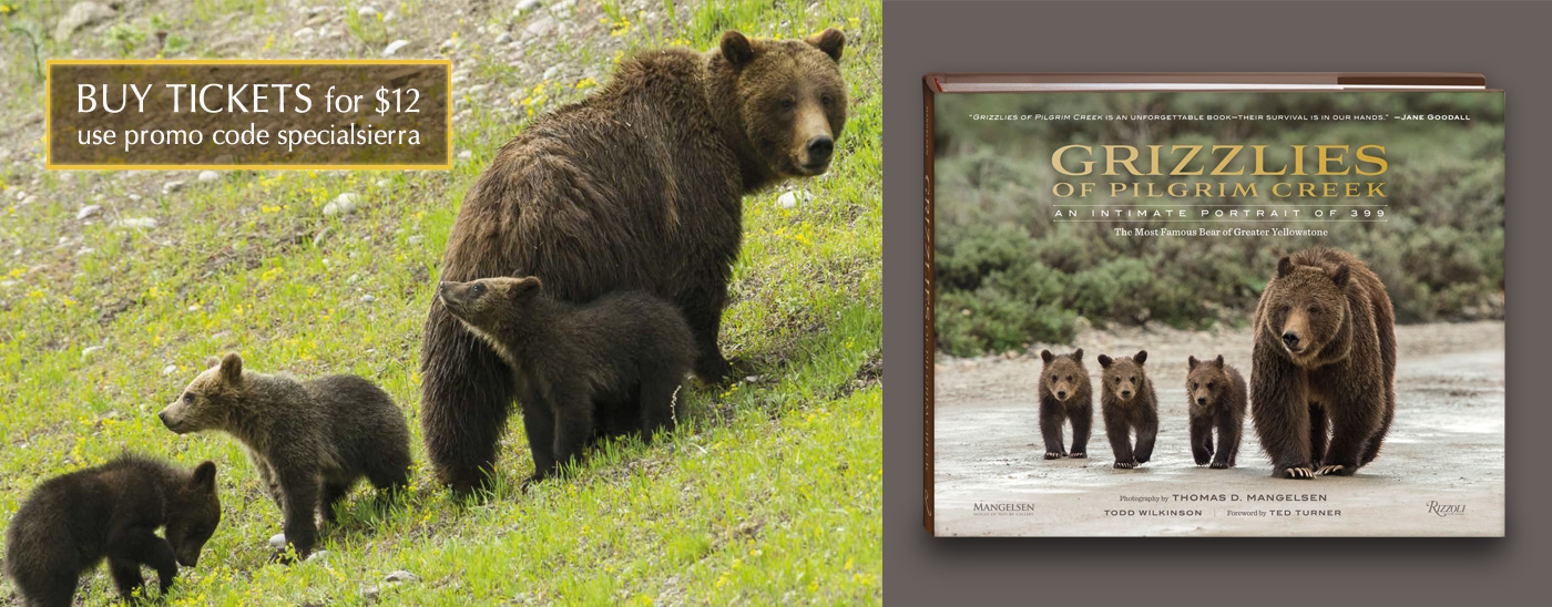 Special Event Celebrating the Most Famous Grizzly Bear in the World