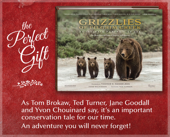 Tom's new book makes a perfect gift for kids of all ages.