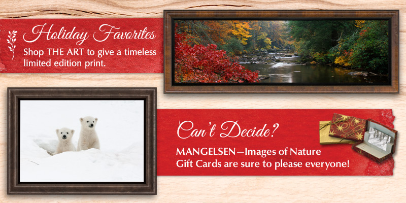 Give a Mangelsen limited edition print or gift card to your loved ones