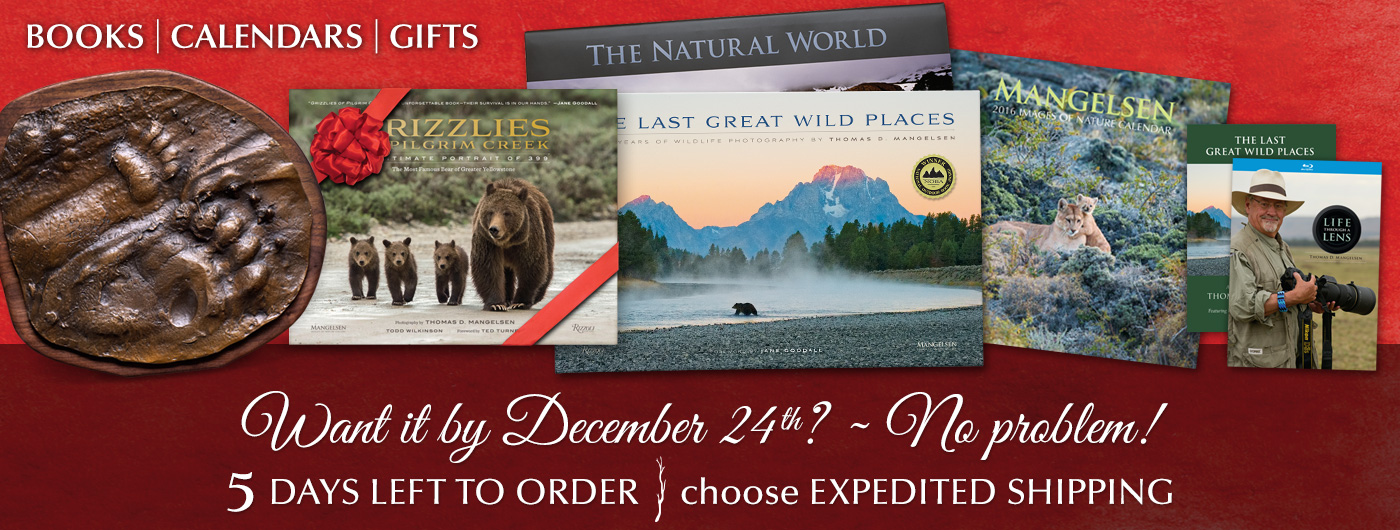 Five days left to order Books, Calendars or Gifts for delivery by December 24th