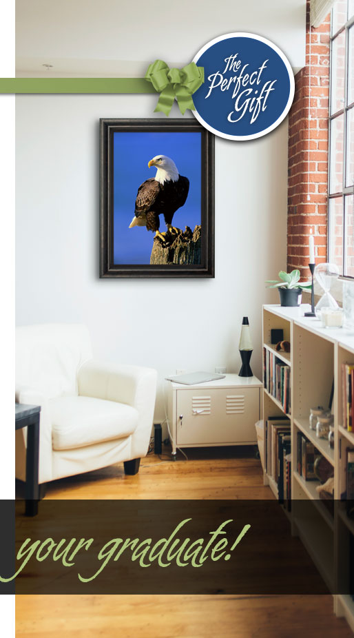 Limited edition photograph titled The Lookout - Bald Eagle. Display option shown: Framed Canvas