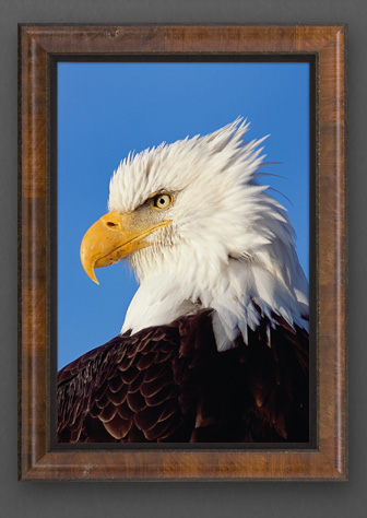 Limited edition print titled True Patriot - Bald Eagle