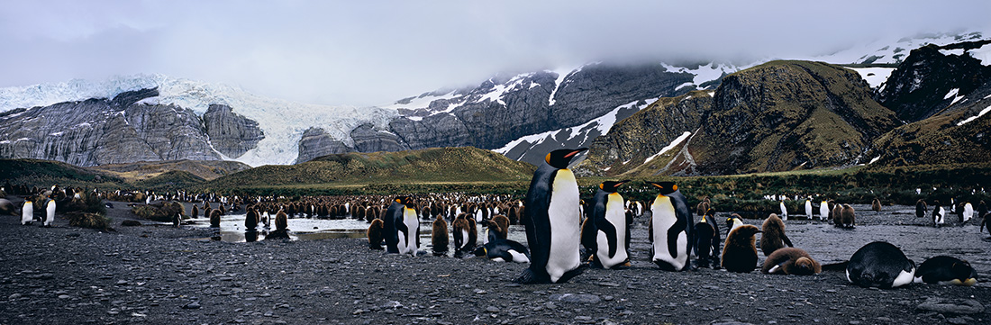 """Mangelsen's """"The Land of Kings""""  was photographed on Gold Harbour, South Georgia Island."""